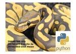 Python 영어 소개 및 발표