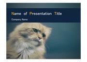 PPT양식 템플릿 배경 - 동물,고양이