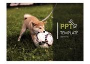강아지 PPT템플릿 / 애완동물 PPT / 깔끔한 동물 PPT템플릿 / 애완견PPT템플릿