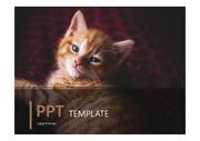 고양이 ppt템플릿 /  반려동물 ppt / ppt템플릿 / 파워포인트 디자인 / ppt