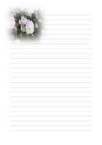 편지지, 노트, 연습장, 속지 v10