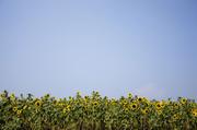 여름 꽃 03