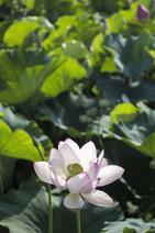 여름 꽃 06