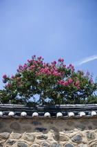 여름 꽃 08