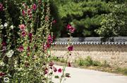 여름 꽃 24