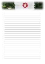 편지지, 노트, 연습장, 속지 1809039
