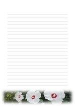편지지, 노트, 연습장, 속지 18090314
