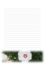 편지지, 노트, 연습장, 속지 18090316