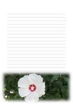 편지지, 노트, 연습장, 속지 18090317