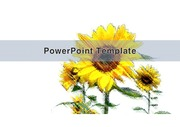 <strong>PowerPoint</strong> Template (해바라기)