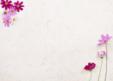 정원 속 코스모스 꽃1
