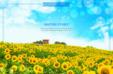 해바라기가 펼쳐진 꽃 편집사진