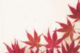 단풍잎 단독사진 08