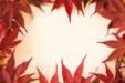 단풍잎 단독사진 09