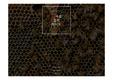 PPT양식(탬플릿)양봉,꿀,벌,양봉산업,꿀벌,귀농