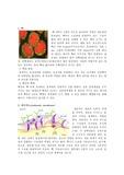 세포소기관 탐구