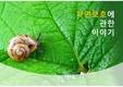 달팽이, 자연, 보호, <strong>생물</strong>, 식물, 유기농, 힐링, 여행, 기쁨, 희망, PPT <strong>템플릿</strong>, 보고서, 디자인