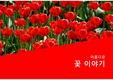 튤립, PPT 템플릿, 건강한 삶, 정열, 태양, 빨강, 꽃, 식품, 보고서, 제품, 장식, 꽃말