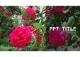 PPT 표자&속지 [장미] ver1
