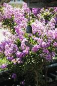 여름 꽃 07