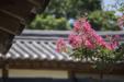 여름 꽃 09