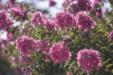 여름 꽃 18
