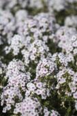 여름 꽃 20