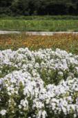 여름 꽃 21