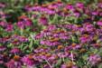 여름 꽃 22
