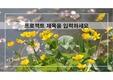 봄꽃 ppt 템플릿 v1808164